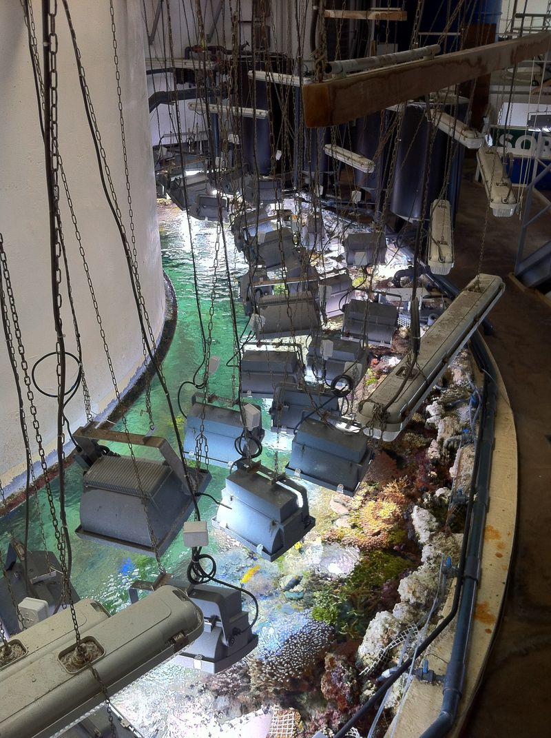 Oceanopolis arrière scène