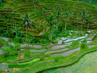 Terraced_rice_fields_in_tegallalang